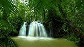 Croatia Green Forest And Waterfall