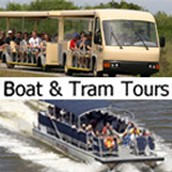 Boat and Tram Tours!