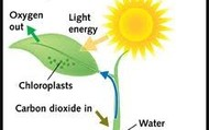 1st photosynthesis example.