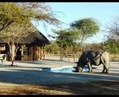 Khama Rhino Santuary