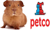 If you are wanting a guinea pig after reading this article then go here!!