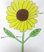 2nd Grade Sunflowers