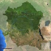 L'information de Gorille de Cross River