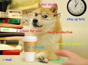 Hipster Doge