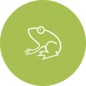 Waterstone Preschool Frog Class