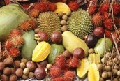 The Amazon rainforest is also important for the fruit and vegitables growing there