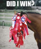 Red & White Winner