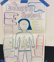 BODY SYSTEMS PROJECT IN MS. DUNHAM'S BIOLOGY CLASS