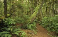 The floor of the rainforest