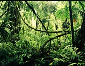Come Down to the Tropical Rainforest