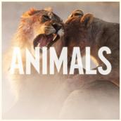 """Animals"""
