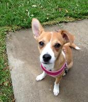 Jencey and Cole's new dog, Emma.