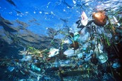 A Plastic Forest in the Pristine Waters