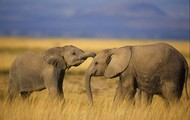 My favorite animal is an elephant!!!