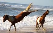 horses kick