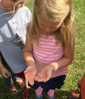 We learned that wire worms eat through roots - bad for gardens!