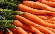 Fresh, juicy carrots!