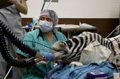 what a veterinary Anesthesiologist does.