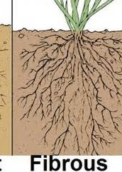Root classification