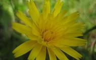Tweede bloem