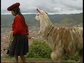 Llama History