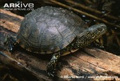 Fun facts about turtles