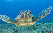 Help The turtles become a common species again!