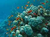 GREAT CORAL REEF VACATIONS INC