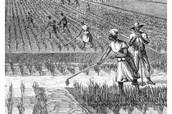 family on the plantation
