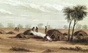 Aboriginal gunnyas