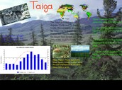 The climate in a Taiga Habitat