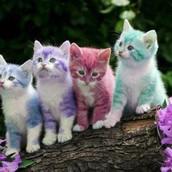 cats fur