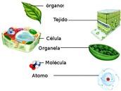 Nivel de organizacion de una planta