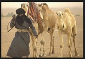 Who were Berbers?
