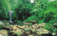 This is the Fraser Island rainforest with a stunning waterfall