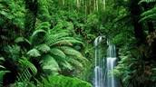 Tropische Regenwoudklimaat