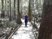 Loblolly Hike