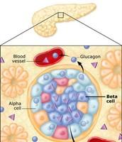 When Blood Sugar Rises (Normal body response) Step 1