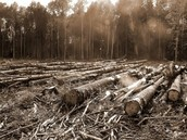 The 2 main issues with Deforestation