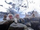 Jikokudani Monkey Park