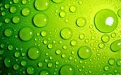 #4 Green