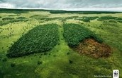 Forests are like the lung of the earth