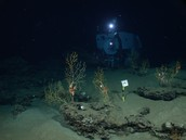 What to expect in the Deep Sea