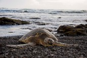 Sea Life - Turtles, Dolphins