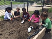 Planting in the Kinder Garden