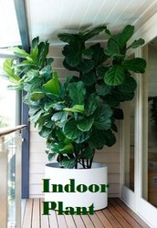 Creating Useful Plans Involving Flowering House Plants