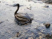 Polluted Water Making Extinction Worse