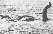 Not been proven as real photo of Nessie