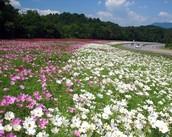10 acre wildflower