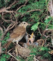 Baby and Mother Sparrows